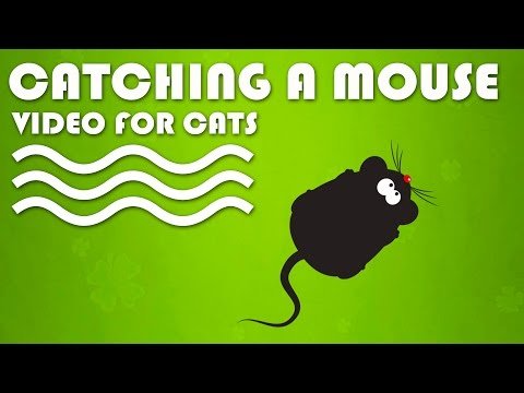 CAT GAMES ON SCREEN - Catching a Mouse! Entertainment Video for Cats to Watch.