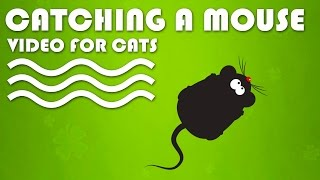 CAT GAMES ON SCREEN - Catching a Mouse! Entertainment Video for Cats to Watch.(TVBINI Website: http://www.tvbini.com/ HOW DID YOUR CAT REACT? Please provide a video link of your cat's reaction in comments. CAT GAMES - Catching a ..., 2015-01-21T18:20:46.000Z)