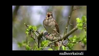 ഒരു പാട്ട് പിന്നെയും പാടി നോക്കുന്നിതാ Poem by Sugathakumari sung by V T Murali