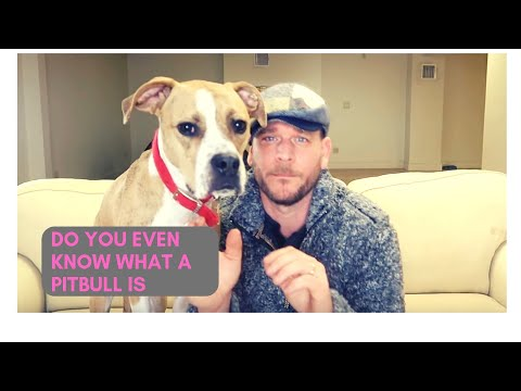 PITBULLS SHOULD BE BANNED??? Pitbull Review