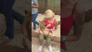 That Time The Lion Cub Tried To Breast Feed!
