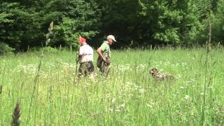 Honoring Point Training With Dave Trahan And Bird Dogs Afield