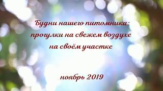 Питомник Хелена`с Хаус. ЧИХУАХУА. ШПИЦЫ. ЙОРКИ. / Видео
