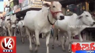 'Cow' Named Yahoo India's 'Personality of the Year' | Teenmaar News