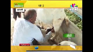 #Agrowon : Success story of Tejas Lengares Goat farming
