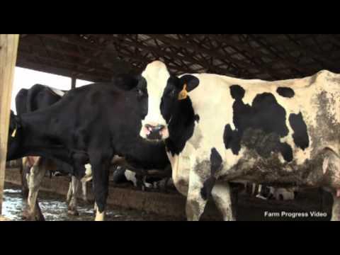 Kentucky Farmer Took Career Detour Before Dairy Success