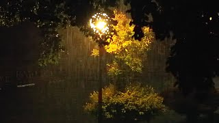 Real Rain Sounds At Night From Light Pole | Meditate And Relax To Get A Deep Sleep Or Focus In Study