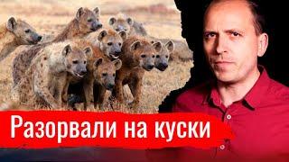 Разорвали на куски // Письма