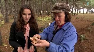 видео Съедобные грибы