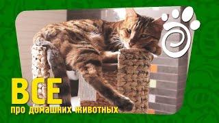 Поведение Котов. Все О Домашних Животных