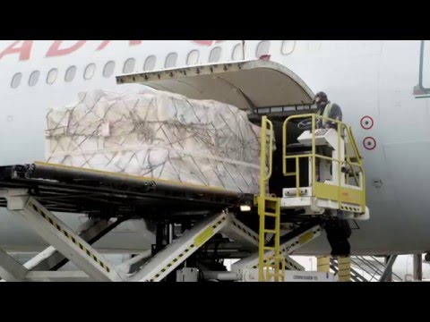 IATA Cargo Airline Management with Business Simulation