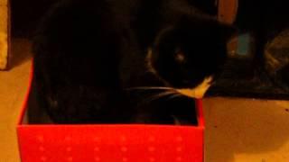 Кот умываеться и ложиться спать в коробку:)))