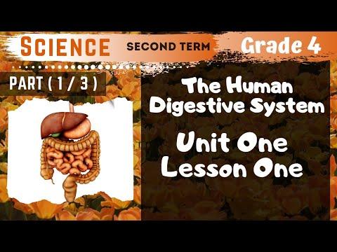 Science | Grade 4 | Unit 1 Lesson 1 - Part...