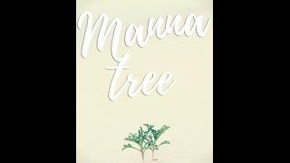 Manna Tree