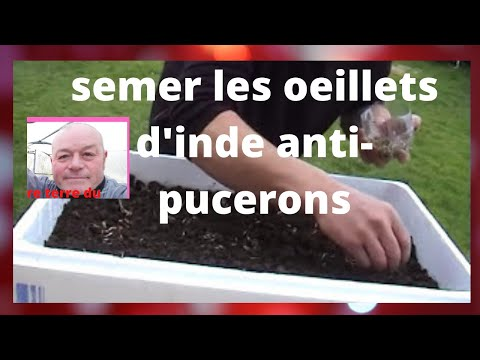 Que Faire Au Jardin En Mars Semer Les Oeillets D Inde Contre Les Pucerons
