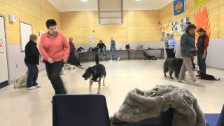 Anchorage Dog Park Training, Heelwork To Music Practice.