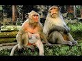 """Achab say to Popeye """"don't miss Polly too much"""" 