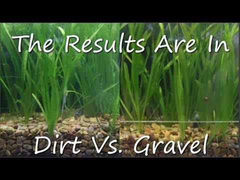 Dirt Vs Gravel Planters Results