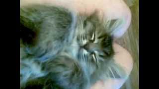 Прикольный спящий котенок