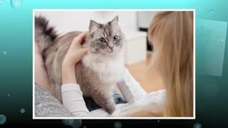 Аллергия на кошек | Лечение симптомов у взрослых и детей