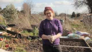 Allotment Diaries - Martha