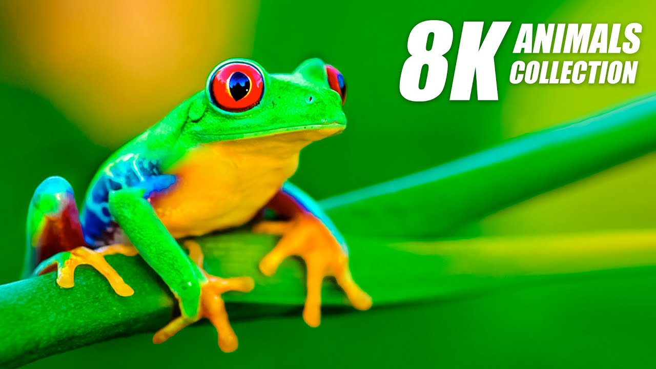 Beautiful Animals Collection in 8K VIDEO ULTRA HD 60FPS