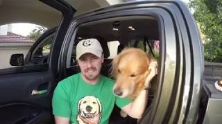 Dog Car Seat Cover  by Bcomfort⭐⭐⭐⭐⭐, reviewed by Oshies World