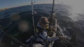 Mako Shark 25_9_19 @ Malabar Sydney Australia.
