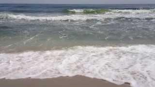 Escape to Sandy Hook Beach Aboard a Seastreak Ferry