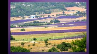 Lavender Oil Distillation in France