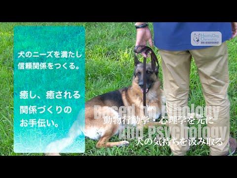 ドッグビヘイビアリスト Healthy Dog Ownership Promo Youtube