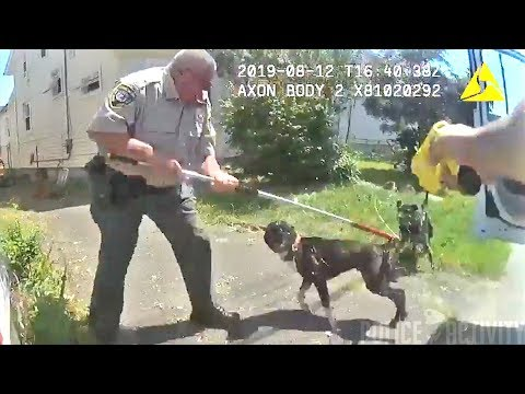 The Woody Show - Apparently Tasers Work on Dogs