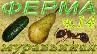 Муравьиная ферма  - Овощи и фрукты для муравьев(, 2016-04-30T07:22:11.000Z)