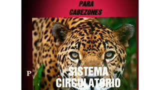 Abierto sistema en animales circulatorio