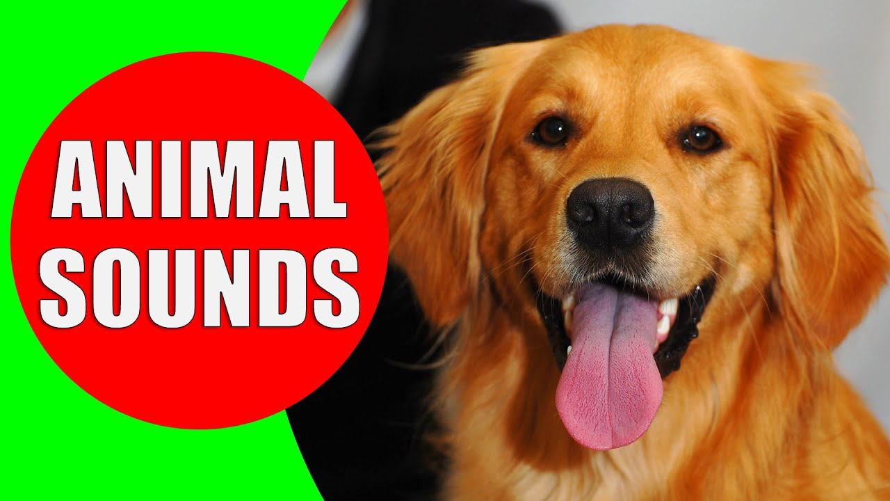 Animal Sounds For Children To Learn || BEST - YouTube