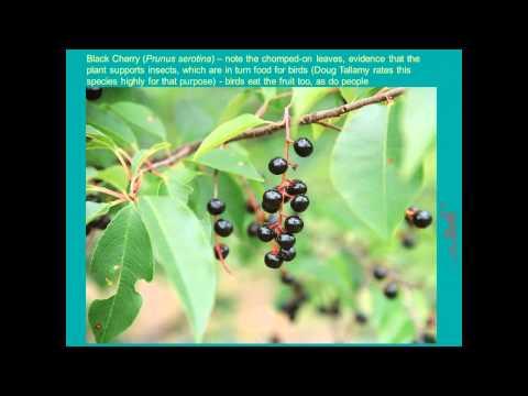 Edible Native Plants for Your Landscape