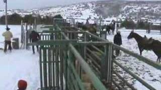 Séjour de travail du bétail dans la neige