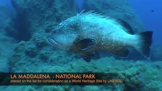 Why the Maddalena Archipelago