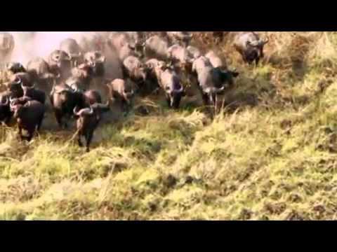 Incredible Animals Migration. Gambella's Hidden Treasures
