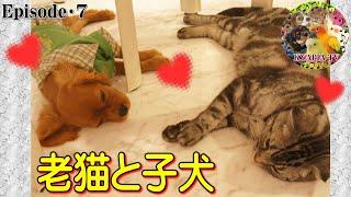 撮影日 2012年11月頃。 「おすわり」「まて」「よし」からの、猫にキス...