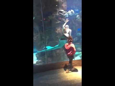 mermaids-at-the-aquarium-restaurant-nashville