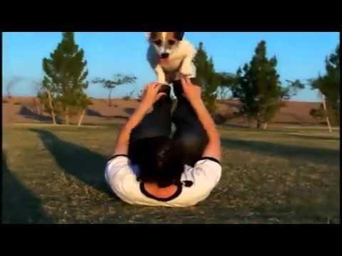 How to train your dog - Amazing dog tricks - Teach your dog too!