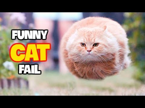 Best Funny Cat Fails June 2017 (Part 1) || Best Fails Compilation By FailADD
