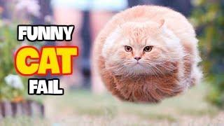 Best Funny Cat Fails June 2017 (Part 1) || Best Fails Compilation By FailADD