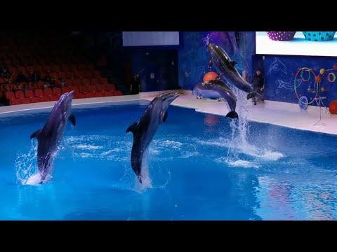 Dolphin show at Dubai dolphinarium/Dubai dolphin show/creek park dolphinarium show/dolphin dance
