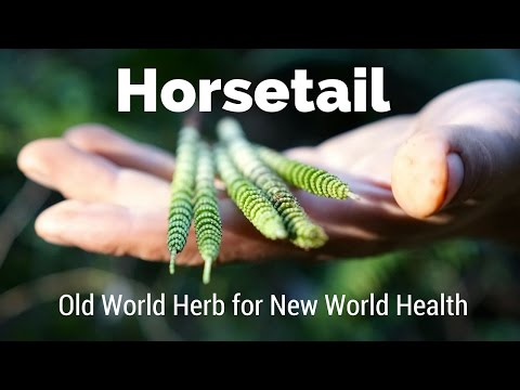 Horsetail - Old World Herb for New World Health | Harmonic Arts
