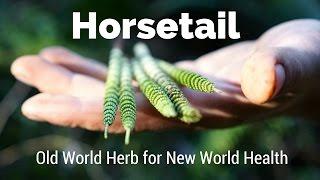 Horsetail - Old World Herb for New World Health | Harmonic Arts