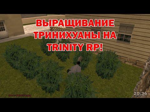 Выращивание тринихуаны на Trinity RP - Полный гайд (С озвучкой!)