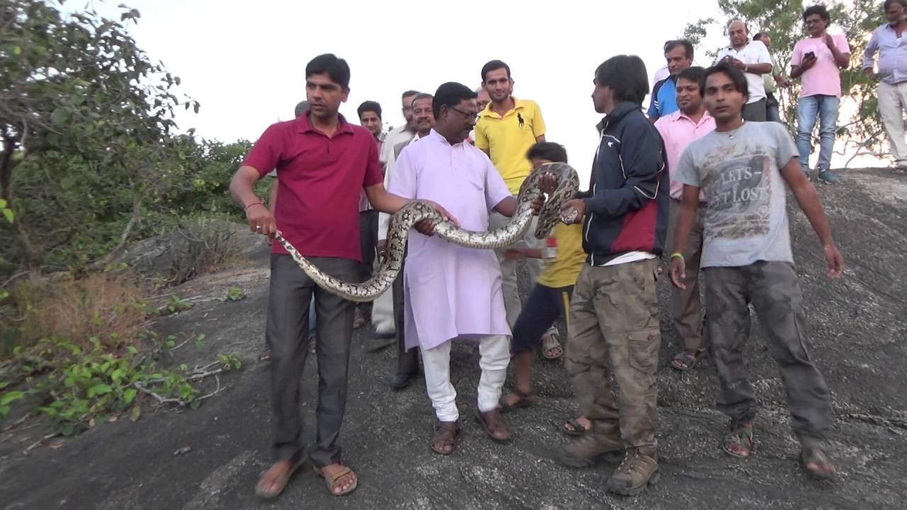 Funny Video: Big Python Attacks Man While Taking a Photo