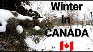 Winter in CANADA Mallu Student in CANADA